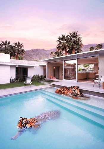 ixxi-paul-fuentes-tigers-in-palm-springs
